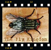 - The Fly Kingdom on YouTube -